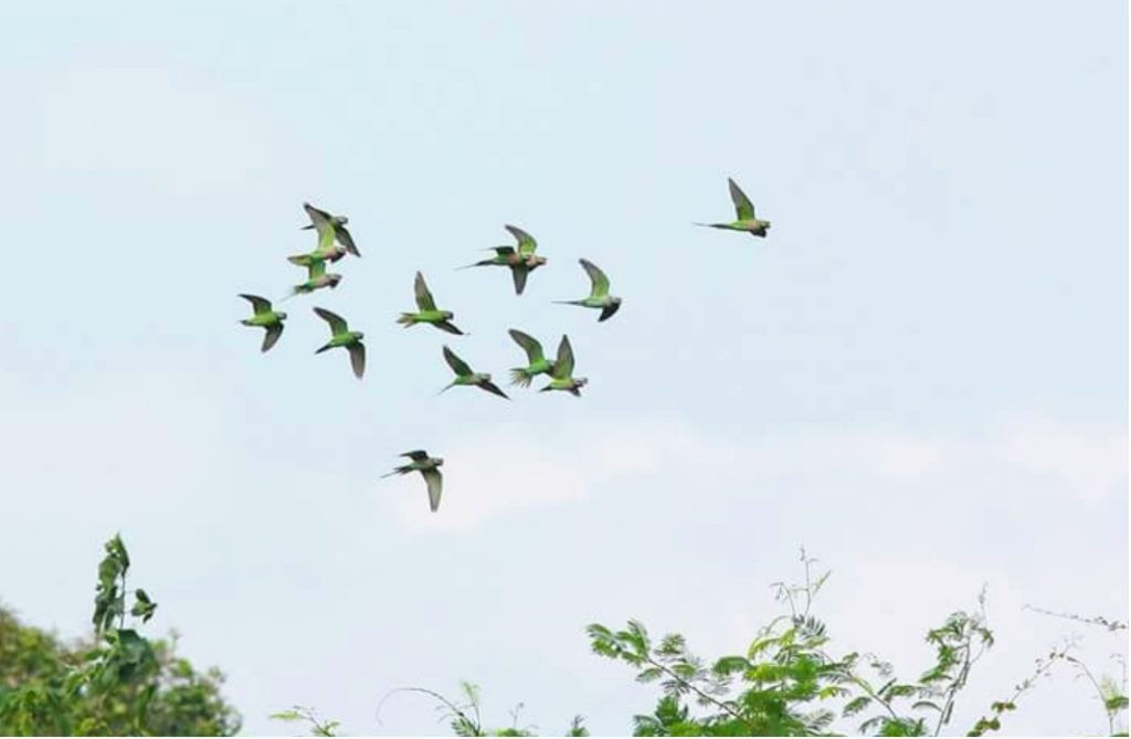 Yok Don National Park Birds