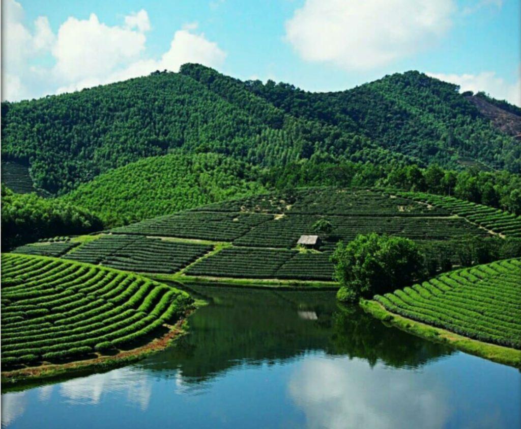 Thanh An Tea Hills