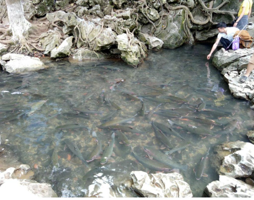 Mythical Fountain Fish