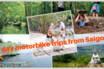 Day motorbike Rental: Mangrove Park in Can Gio