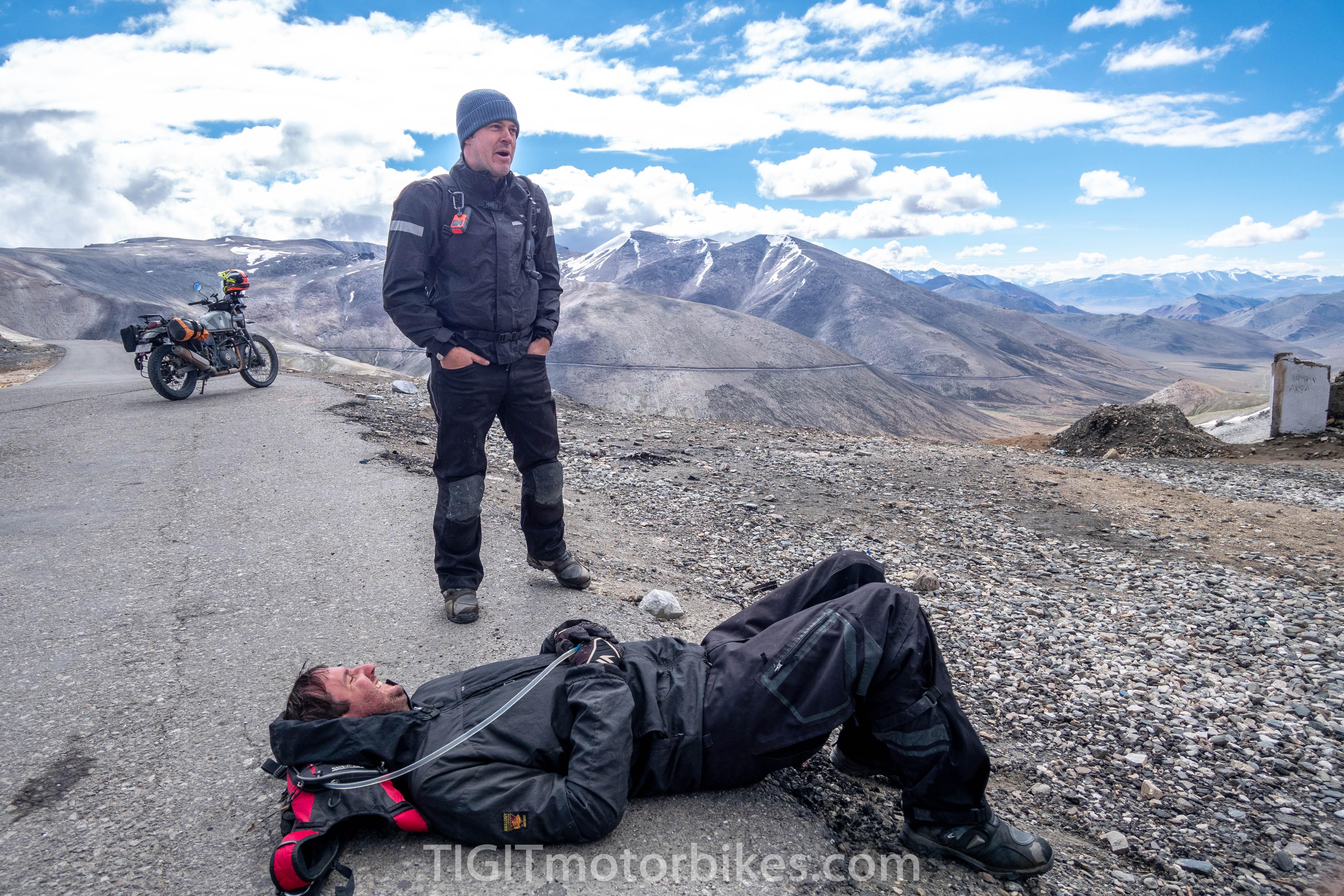 High Altitude Himalayans