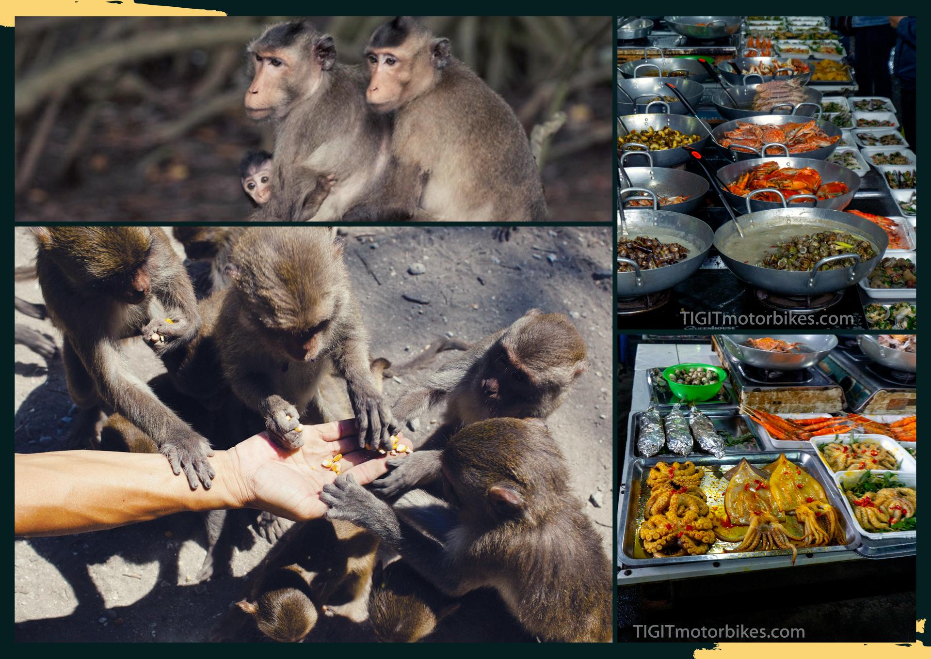 food and monkey 1