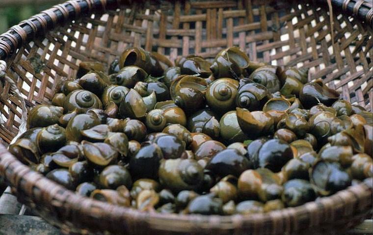 Snails in a basket