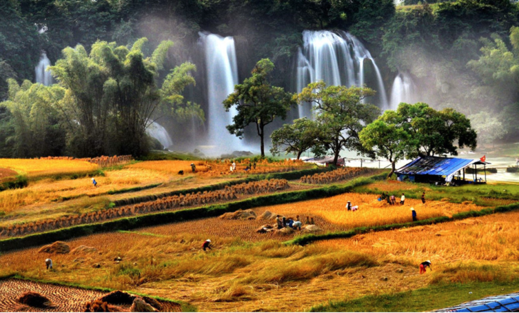 Ban Gioc Waterfall- Ha Giang