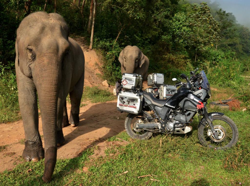 Elephant & Motorcycle Thailand